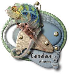 """""""Caméléon"""""""