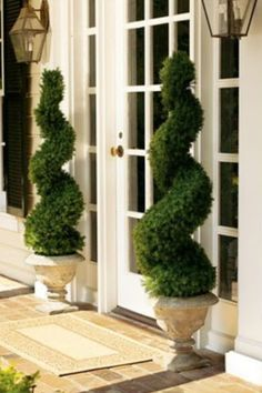Swirl topiaries. MUST have for my front porch.