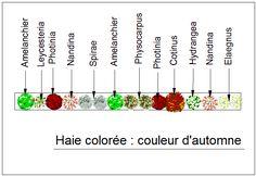 Haies aux couleurs d'automne flamboyantes, constituées de nombreux arbustes caducs. Dès le printemps elle ornementera votre jardin de ses floraisons et ce, jusqu'en automne grâce au Leycesteria et au Nandina. Le Cotinus dominera l'ensemble de cette haie tant par sa taille que par sa couleur pourpre. L'ensemble évoluera dans des tons rouge, jaune et blanc tout au long de la saison. Maintenir cette haie en forme libre af...
