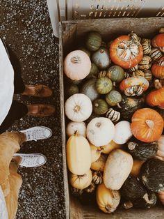 laurenarlene:  It officially feels like autumn.