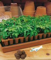 Ten Steps To Successfully Starting Vegetable Seeds - PlanterTomato Vegetable Gardening