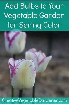 A few simple steps to make sure your spring vegetable garden is popping with dramatic color!