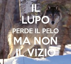 Nonna taught me this years ago. Wish I had listened to her. Il lupo perde il pelo ma non il vizio! The wolf can shed its fur but never his ways!
