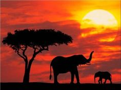 african-elephant-silhouette-sunsets-natural_72451 (better tree)