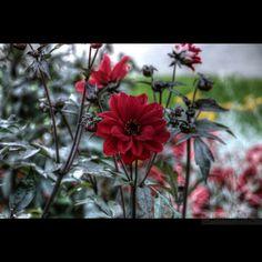 Blommor i Sala park