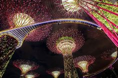 The 18 Supertrees at the Gardens by the Bay in Singapore were illuminated on Monday night for a 'Light and Sound' show which dazzled passersby on July 2, 2012. The Supertrees measure 150-feet tall each and house 163,000 plants from 200 species.