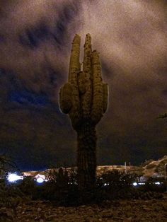 Cactus on the night in Humahuaca. Jujuy, Argentina.  My photography web site: http://gegelaphoto.free.fr  #photography #naturephotography #cactus #night... - gerald ligonnet - Google+