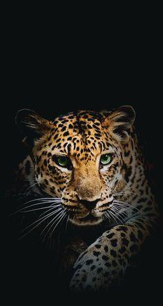 Animal, wallpaper, and tiger image Wild Animal Wallpaper, Leopard Wallpaper, Lion Wallpaper, Wallpaper Backgrounds, Emoji Wallpaper, Wallpapers, Colorful Wallpaper, Beautiful Cats, Animals Beautiful