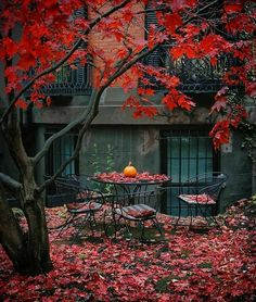 Wanna be there now 😢 The post Wanna be there now 😢 autumn scenery appeared first on Trendy. Photoshoot Idea, Beautiful Places, Beautiful Pictures, Autumn Cozy, Autumn Fall, Happy Autumn, Autumn Scenery, Autumn Aesthetic, Red Aesthetic