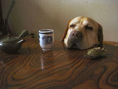 ささ、お茶でも一杯