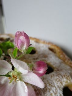 Polkadot-Tarte with Rhubarb - recipe
