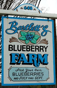 Newport, NH - At Bartlett's Blueberry Farm, you can pick your own blueberries and buy homemade jam, local maple syrup and honey. Blueberry Picking, Blueberry Season, Blueberry Farm, Blueberry Recipes, Blueberry Delight, Organic Blueberries, Pumpkin Farm, Farm Signs, Down On The Farm