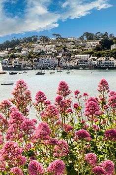 summer wildflowers outside of the village of St. Mawes, Cornwall, United Kingdom