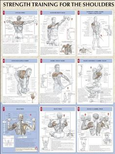Strength Training Anatomy: Strength Training for the Shoulders Poster by Frederic Delavier. $11.21. Publisher: Human Kinetics; 1 edition (April 13, 2005). Series - Strength Training Anatomy. Publication: April 13, 2005