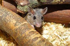 Super piège à souris sans danger pour vos animaux domestiques et sans tuer les souris