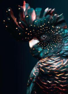 Pretty Birds, Beautiful Birds, Animals Beautiful, Animals And Pets, Baby Animals, Cute Animals, Animal Wallpaper, Canvas Prints, Art Prints