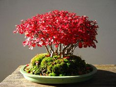 Forest of cotoneaster seed