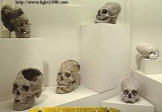 Five skulls were found that still exist in Ica, Peru, and Merida, Mexico. They have a brain cavity area ranging from 2200 CC to 3200 CC. Modern humans average 1450 CC  in size with the largest human skull to date at 1980 CC. All these skulls have Neanderthal (post-flood humans) characteristics. They are huge in size and come from an unknown species according to science.  In fact according to science they do not exist at all but for the fact that they are viewable today.