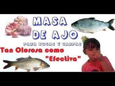 Masa de Ajo para Bogas y Carpas - YouTube Carpe, Pasta, Fish, Youtube, Animals, Fishing Tricks, Bass Fishing, Fishing Tips, Machine Embroidery Designs
