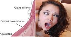 Everyone Should Know These Things About The Clitoris