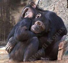 965 Fantastiche Immagini Su Scimmie Monkeys Animal Kingdom E Ape