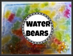 Squiggles and Bubbles: Edibe Water Beads or Bears!