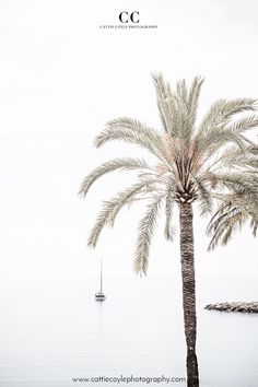 Fine art print of a palm tree, pier and sailboat on a calm morning in Menton on the French Riviera | Archival prints are available framed and unframed at www.cattiecoylephotography.com Palm Tree Sketch, Tree Sketches, Palm Tree Art, Palm Trees, Coastal Wall Decor, French Riviera, Minimalist Art, Sailboat, Cactus Plants