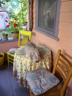 Jack sleeping on the table on the back porch