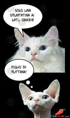 The Effective Pictures We Offer You About Satire books A quality picture can tell you many things. You can find the most beautiful pictures that can be presented to you about Satire friend in this acc Animals And Pets, Funny Animals, Cute Animals, Cat Memes, Funny Memes, Jokes, Foto Top, Italian Memes, Grumpy Cat