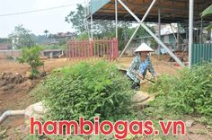 Hiệu quả mà hầm khí sinh học biogas mang lại