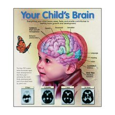 Infant-Child Brain Development: Did you know that positive social-emotional early experiences promote healthy brain development, while traumatic experiences rewire the child's brain to adapt to recurring high levels of stress.