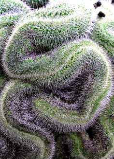 Cactus by Blue Boat· #patterns and #textures·