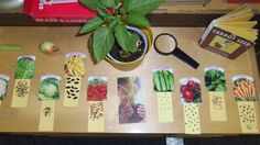 Observing seeds at the science area