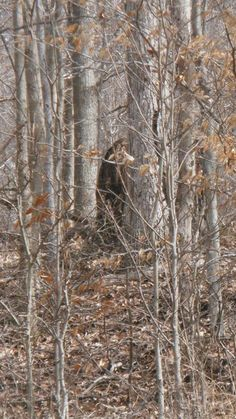Bigfoot Stories, Ufo Stories, Yeti Bigfoot, Bigfoot Sasquatch, Bigfoot Photos, Pie Grande, Finding Bigfoot, Bigfoot Sightings, Mysteries Of The World