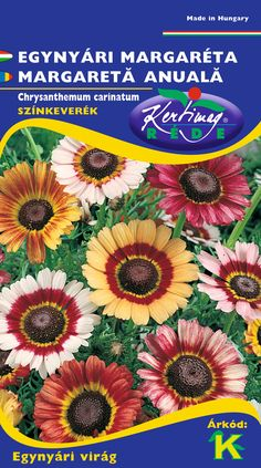 Egynyári virágok : Estike Chrysanthemum, How To Make, Chrysanthemum Morifolium