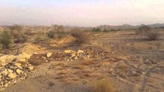 Arid Swales Update 20 Months After First Planting--Saudi Arabia