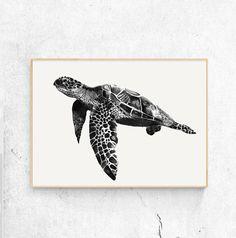 Color Pencil Turtle Pencil Print Drawing Illustration Home