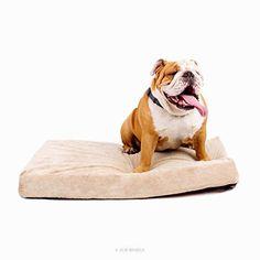 Solid Memory Foam Orthopedic Dog Bed        >>>>> Buy it now    http://amzn.to/2ctSBoC