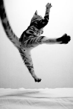 kittehkats:  reblogged from catsinblackandwhite (Source: j-p-g, via cats-from-another-planet)