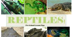 Nothing But Monkey Business: Reptiles! Pre K Lesson Plans, Preschool Lesson Plans, Activities To Do, Children Activities, Reptiles, Amphibians, Most Beautiful Animals, Cool Pets, Pre School