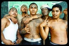 Gangs are found all over the United States. The following gangs are to be considered the top ten most dangerous gangs in the United States.  Naming the following gangs in order from ten to one: Aryan Brotherhood, Mexican Mafia, Nuestra Familia, Mongols, Bloods, Hells Angels, 18th Street Gang, Crips, Latin Kings, and finally Mara Salvatrucha aka MS-13. These gangs are notorious for different crimes all over the country. These crimes committed have made them rank in the top ten of dangerous…