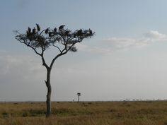 Giraffe, Elephant, Ostriches, Cheetahs, Crocodiles, Hyena, Leopards, Stork, Zebras