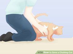 Image titled Save a Choking Cat Step 9