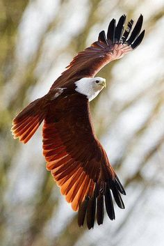 Kill the ants! Pretty Birds, Beautiful Birds, Animals Beautiful, Exotic Birds, Colorful Birds, Aigle Animal, Eagle Pictures, Kinds Of Birds, Birds Of Prey