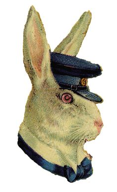 White hare with blue cap