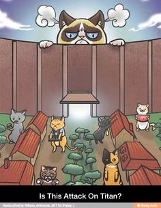 Grumpy cat attack