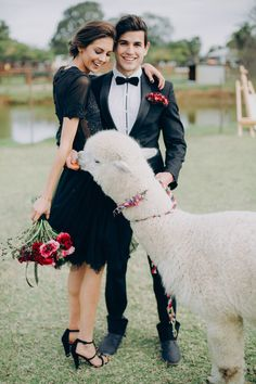 Fun wedding shoot with an alpaca // Black Tie and Berry-Toned Styled Shoot on a Cuddly Animal Farm