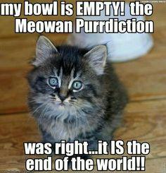 Meowan purrdictin