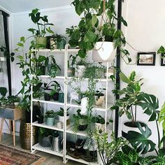 "1,120 Likes, 18 Comments - Urban Jungle Bloggers™ (@urbanjungleblog) on Instagram: ""#plantshelfie Swipe left to see more! Which one is your favorite? :@plantarchives…"""