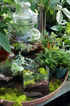 displaying the terrariums with other plants